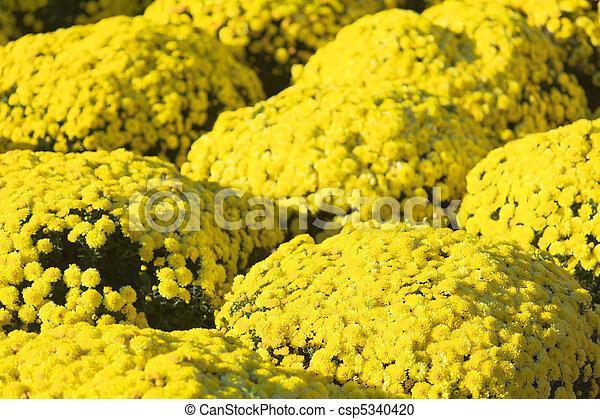 Mercado de flores - csp5340420