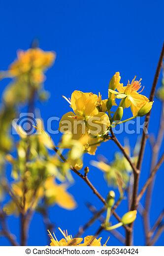 Mercado de flores - csp5340424