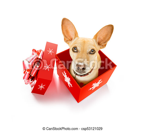 merry christmas dog in a box csp53121029
