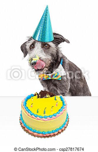 Sensational Messy Birthday Dog Eating Cake Funny Photo Of A Messy Dog Eating Funny Birthday Cards Online Hendilapandamsfinfo