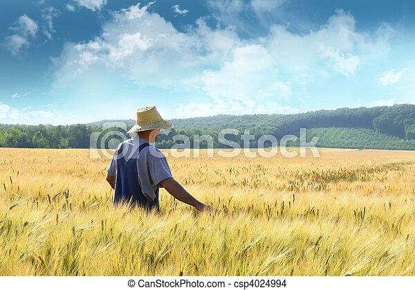 mező, gyalogló, búza, át, farmer - csp4024994