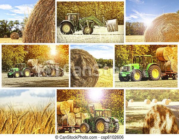 mezőgazdaság, háttér - csp6102606
