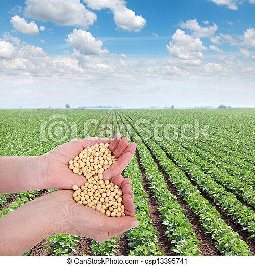 mezőgazdaság - csp13395741