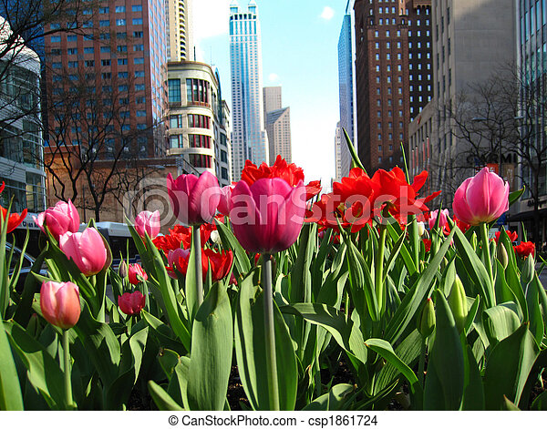 Michigan Avenue with blooming tulips - csp1861724