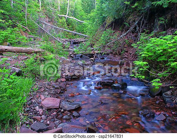 Riffles de Jacobs Creek en los densos bosques del norte de Michigan. - csp21647831