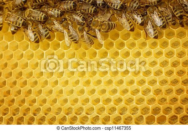 Las abejas de miel bordean - csp11467355