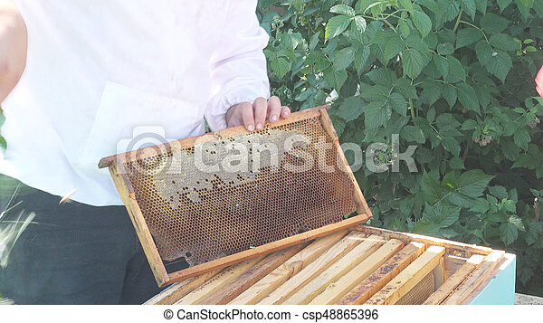 apiculteur 48