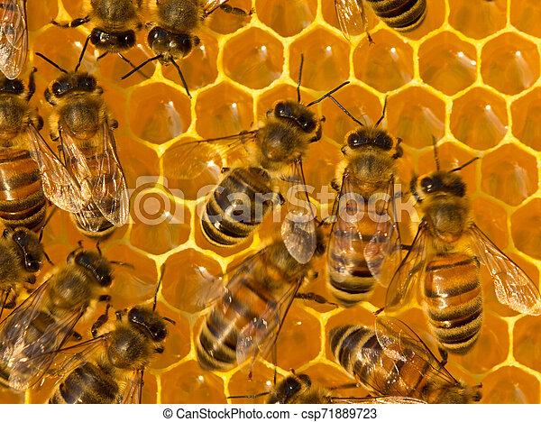 Convertir néctar en miel - csp71889723