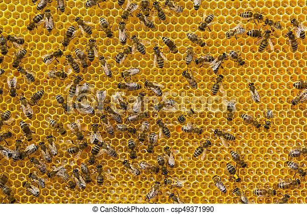 Convertir néctar en miel - csp49371990