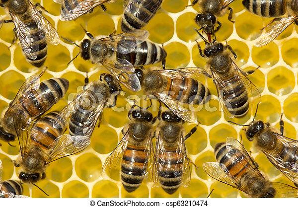 Convertir néctar en miel - csp63210474