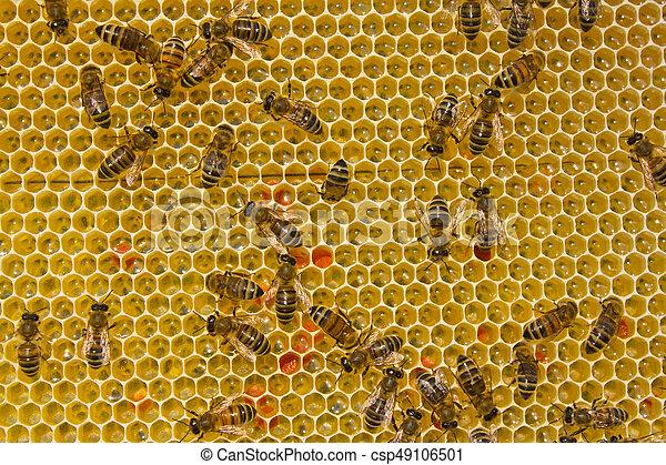 Las abejas convierten el néctar en miel - csp49106501