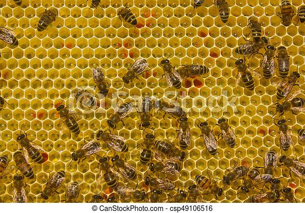 Las abejas convierten el néctar en miel - csp49106516