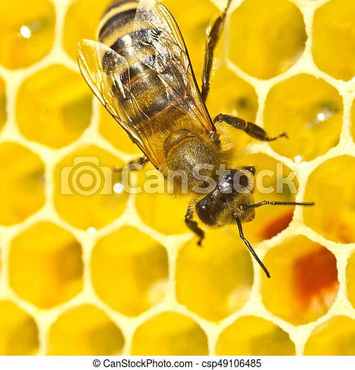 La abeja convierte el néctar en miel - csp49106485