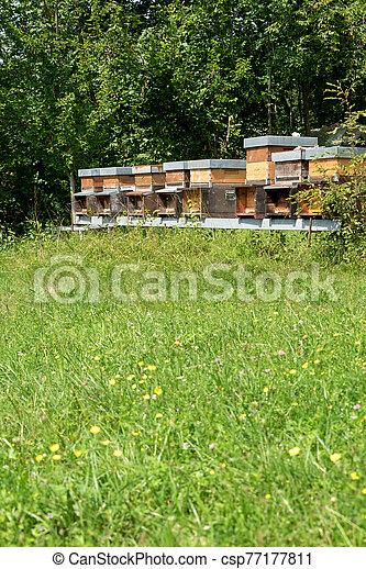 miel, fila, pradera - csp77177811