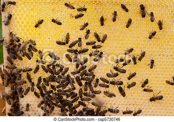miel fresca y abejas - csp5730746