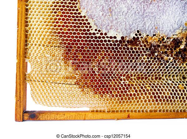 La miel fresca en el peine. - csp12057154