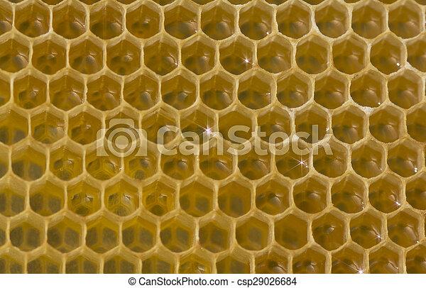 Néctar y miel - csp29026684