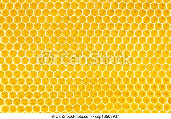 La miel en el fondo del panal - csp16503937