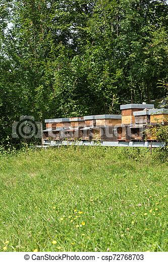Fila de miel en el prado - csp72768703