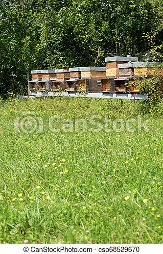 Fila de miel en el prado - csp68529670