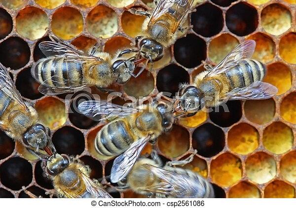 Nectar o transferencia de miel. - csp2561086