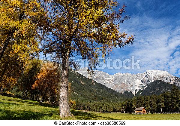 Miemenger Plateau in colorful autumn season. Austria, Tyrol. - csp38580569