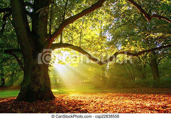 Mighty oak tree - csp22838558