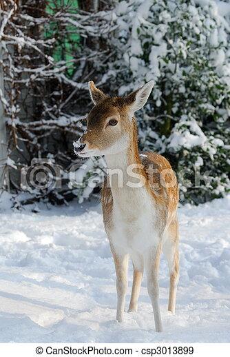 mignon, cerf, hiver - csp3013899