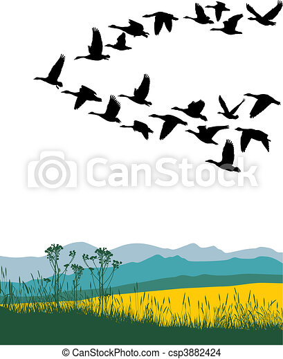 Migrating geese in the spring - csp3882424