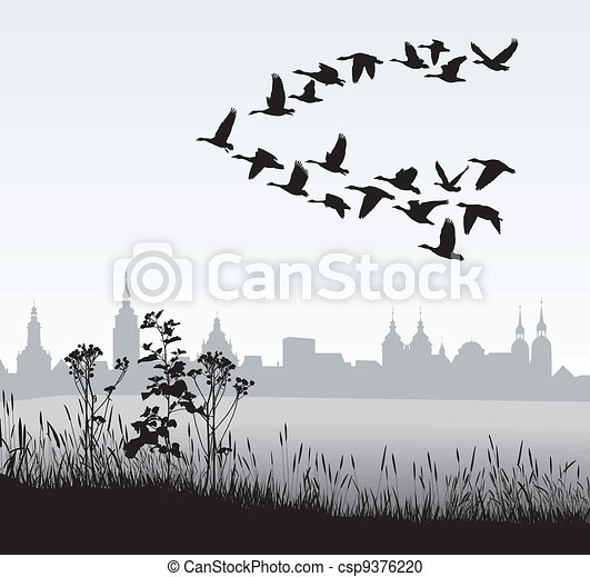 Migrating wild geese of the country - csp9376220