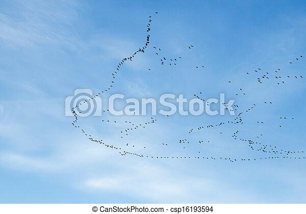 migration of birds - csp16193594