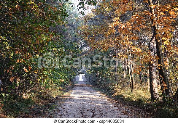Milan (Italy): Park of Groane at fall - csp44035834