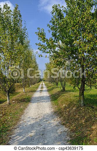 Milan (Italy): park of Grugnotorto at fall - csp43639175