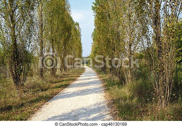 Milan (Italy): park of Grugnotorto at fall - csp46130169