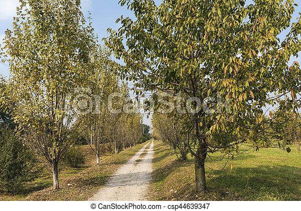 Milan (Italy): park of Grugnotorto at fall - csp44639347