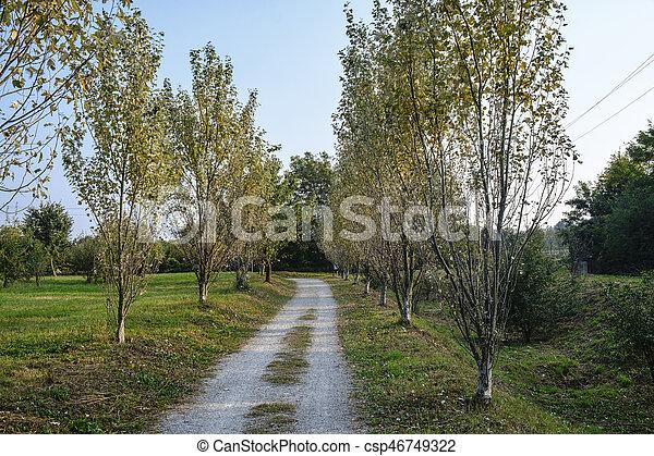 Milan (Italy): park of Grugnotorto at fall - csp46749322