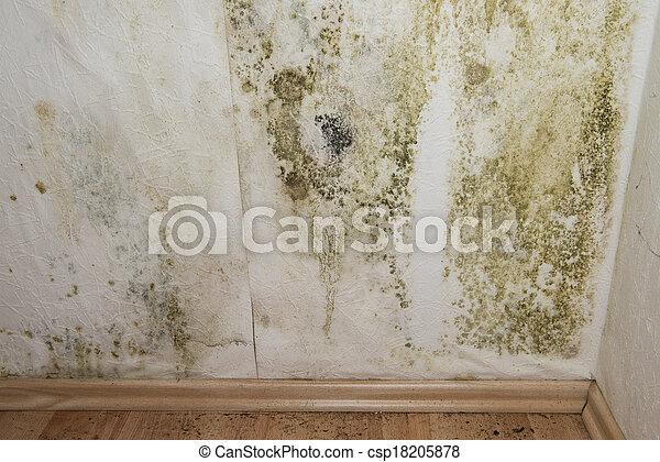 Mildewed Walls - csp18205878