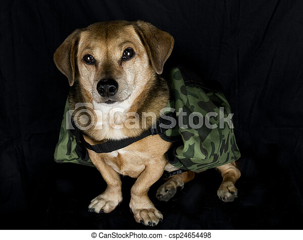 military working dog - csp24654498