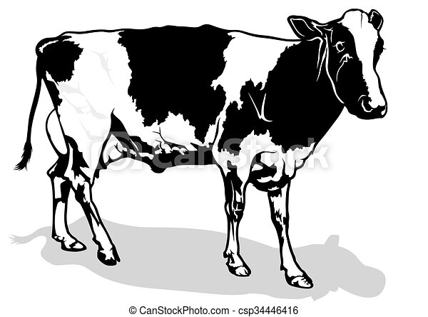 Spotted Milk Cow