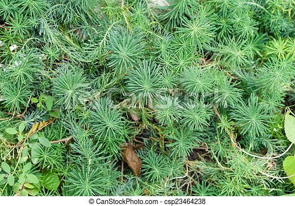 milkweed decorative - csp23464238