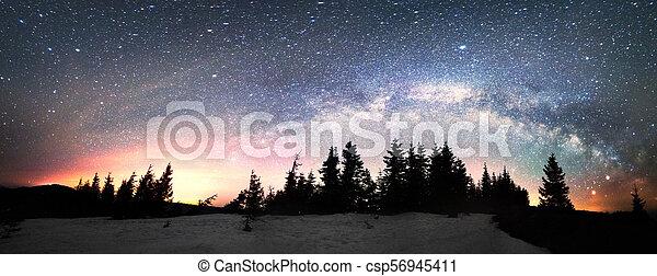 Milky Way over the Fir-trees - csp56945411