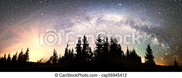 Milky Way over the Fir-trees - csp56945412