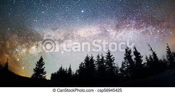 Milky Way over the Fir-trees - csp56945425