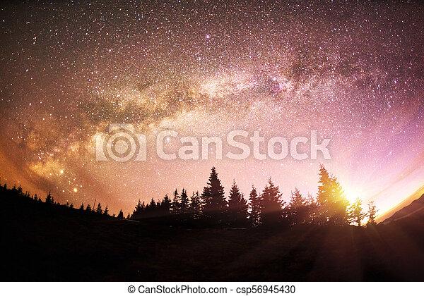 Milky Way over the Fir-trees - csp56945430
