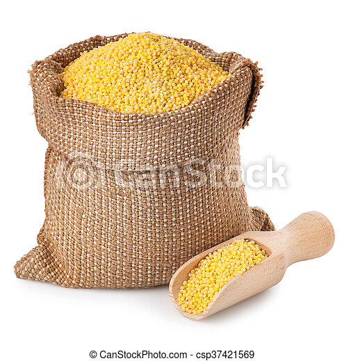 millet in sack with scoop isolated on white background - csp37421569