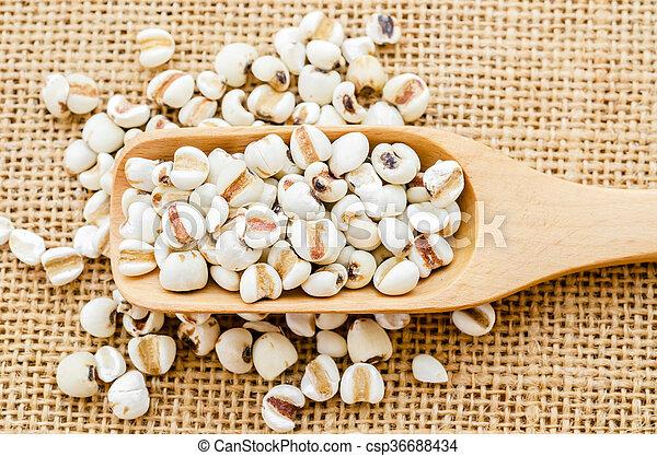 Millet rice in wooden spoon. - csp36688434