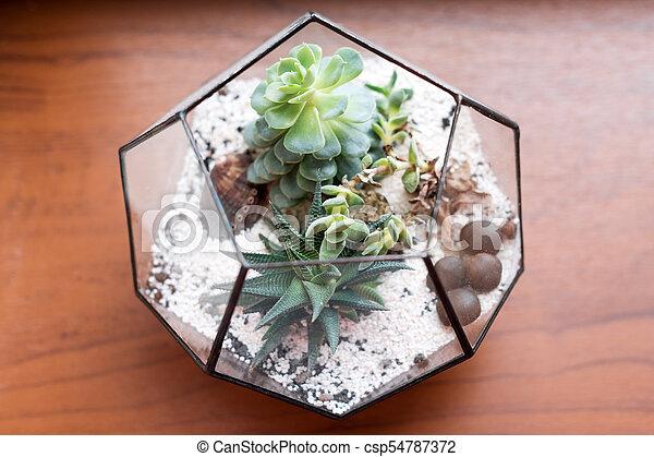 Mini Succulent Garden In Glass Terrarium On Wooden Windowsill