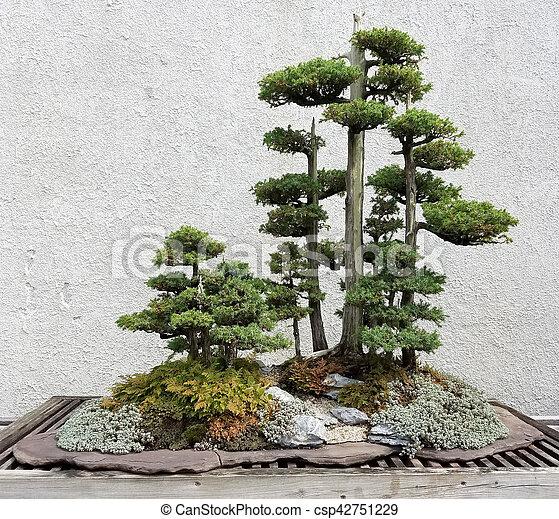 Miniature Bonsai trees - csp42751229