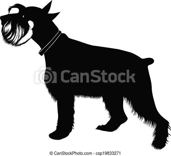 miniature schnauzer dog - csp19833271