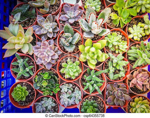 Miniature Succulent Plant Various Types Beautiful Succulent Plant